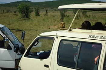 American Tourists on Game Drive